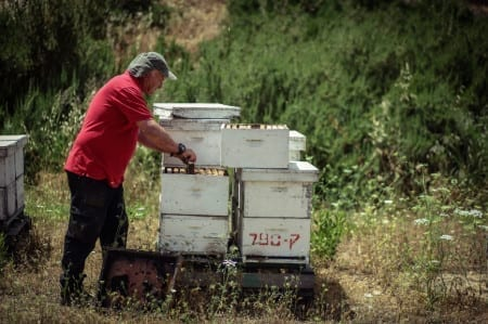 'A Day with a Beekeeper'