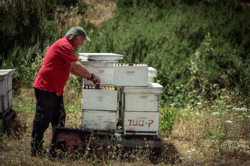 ׳A Day with the Beekeeper׳